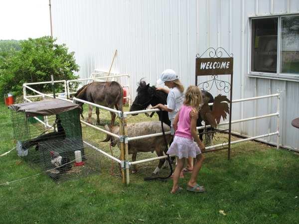 Our Farm Animal Exhibit